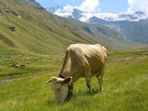 Zo willen wij koeien graag zien